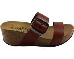 Plakton 273004